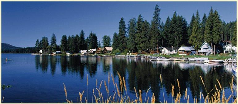 The Tree Service Serving Diamond Lake Washington 509